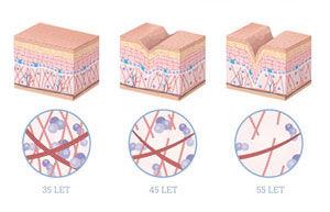 Kolagenní peptidy složení